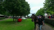 Stock Video Footage of Race Horses 20110816-144646