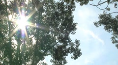 Sun and poplar tree pan Stock Footage