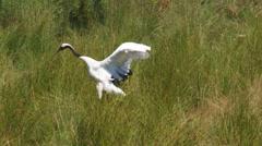 common crane - stock footage