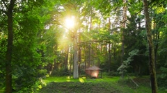 Fairy forest Stock Footage