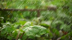 Large drops of rain falling on plants Stock Footage