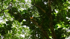 Low angle POV of jungle canopy overhead. - stock footage