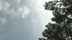 clouds and poplar tree pan real time - stock footage