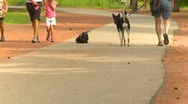 People and pets on path checking each other out, anonymous Stock Footage