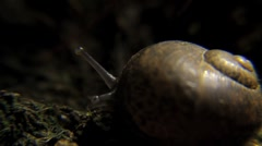 Snail on Forest Floor - Close Up, Macro HD Stock Footage