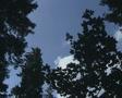 Pan across treetops SD Footage