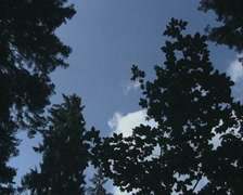 Pan across treetops Stock Footage