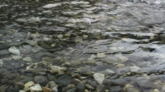 Salmon Wiggle Through Stream - stock footage