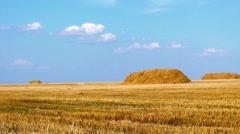 Golden windy wheat field Stock Footage