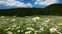 Summer landscape - timelapse Stock Footage