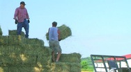 Stock Video Footage of Farmers Loading Hay