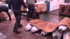 Frozen Tuna Auction at Tsukiji Fish Market Stock Footage