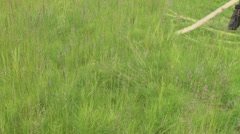 Mowing Grass with Scythe 1 Stock Footage