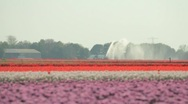 Stock Video Footage of Flower irrigation