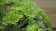 Curled leaf parsley Stock Footage