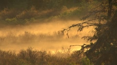 Morning Mist Stock Footage
