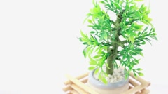 Artificial plant in flowerpot circled by wooden lattice rotates counterclockwise Stock Footage