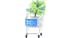 Artificial ornamental plant in flowerpot inside shopping trolley - stock footage