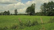 Dutch Landscape Stock Footage