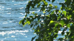 Rushing river and leaves 2 - focus resolve Stock Footage