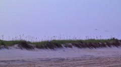 Seagulls fly at sunset 03 Stock Footage