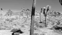 Lost in the Desert B&W Stock Footage