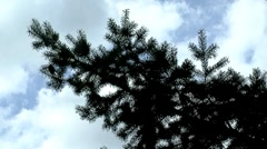 Christmas tree branch Stock Footage