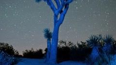 Stock Video Footage of Star Lapse Pan Joshua Tree