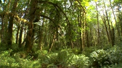 Pan of Rain Forest in Olympic National Park Stock Footage