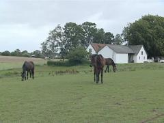 Three brown horses eat grass in the meadow. Stables in suburb. Stock Footage