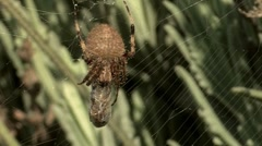 Orb Spider 2 Stock Footage