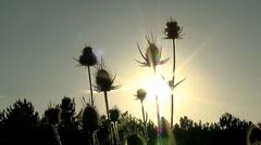 Plants Stock Footage