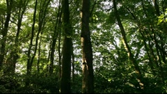 Woods - stock footage