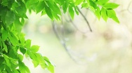 Stock Video Footage of Green leaves frame 1