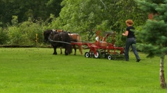 Horses lawn mowing Stock Footage