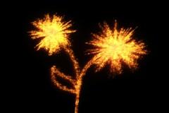 Fiery flower NTSC - stock footage