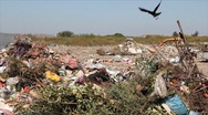 Pollution, crow on garbage Stock Footage