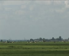 Holland polder land Stock Footage