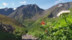Mountain Trail and Columbine Stock Footage