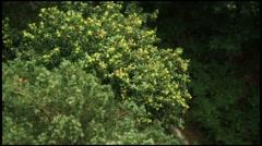 Arial Tree BV 1 Stock Footage