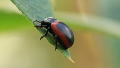 Bug Stock Footage