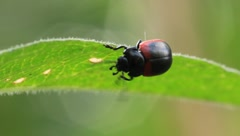 Bug - stock footage