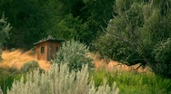 Stock Video Footage of Outhouse Shed in the woods
