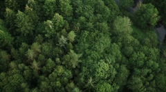 Beautiful Tree's and Field Fly Over Stock Footage
