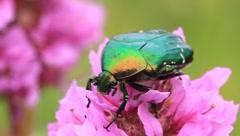 Big green bug Stock Footage