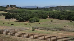 Napa Valley Pasture with livestock Stock Footage