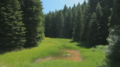 A small meadow with tall grass surrounded by pines - stock footage