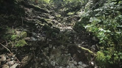 Tree roots broke through to the ground in a mountain forest. - stock footage