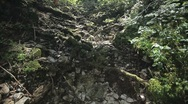 Tree roots broke through to the ground in a mountain forest. Stock Footage