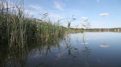 Summer rushy lake Stock Footage